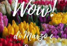 Wow di Marzo e Aprile ♥ In collaborazione con la #TribùDegliWow